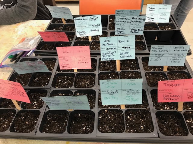 Seed Sowing 3